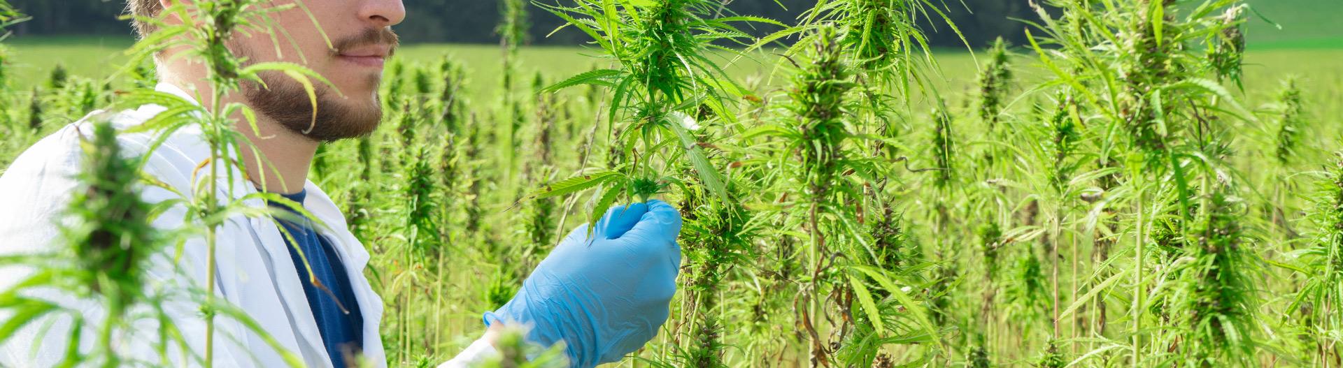Hemp and Cannabis Packaging Heat Sealers